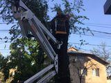 Taierea copacilor ce incurca cladirilor,taierea copacilor-defrisare, lucrari la inaltime , Autoturn