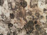 У вас сильный запах  плесени в квартире ? Удаление грибков и запахов при помощи Генератора Озона.