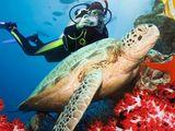 Египет !!!!Восхитительное Красное море ждет Вас  ! Вылет 13 сентября