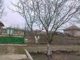 Vind casa in s Bilicenii Vechi, Singerei