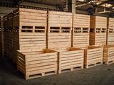 Контейнеры для фруктов и овощей / Containere pentru fructe si legume
