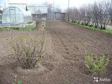 Косим траву, копаем огороды, белим деревья, убираем мусор