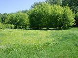 Lot linga padurea de pini, traseul Chisinau-Orhei.