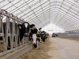быстро-возводимая животноводческая ферма, легко-разборный ангар для сельхозпродукции, лёгкий склад
