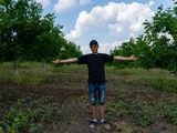 Ореховая рента – гарантированный достаток. Только для граждан Молдовы.