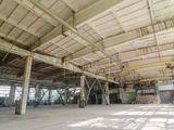 Vânzare, Spațiu Industrial, Spațiu Comercial, r-nul Căușeni 245000 euro