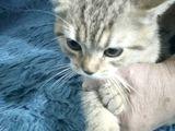 девочка ласковая 3 месяца