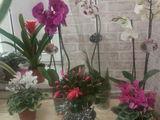 Flori de camera. De toate.