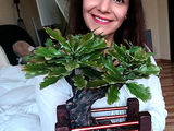 Vip cadou pentru barbati:iubit,tata,sef...Bonsai stejar din argila polimerica..