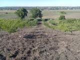 Продам или меняю 16 а земли!!! фруктовый сад! яблони,вишня