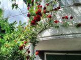 Se vinde casă cu două nivele  în centrul orașului Soroca