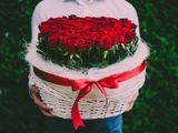 """Красная роза """" Королева цветов """" от 20 лей!!!"""