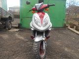 Viper race 50c