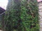 Sadirea plantelor decorative(copaci fructiferi flori tui arbusti) amenajari de gradini si cu pietre