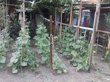 Se vinde pămînt pentru construcţii(7 ari de pămînt) /casă bătrînească în centrul oraşului Soroca