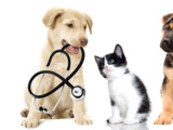 Кастрация домашних животных с выездом на дом