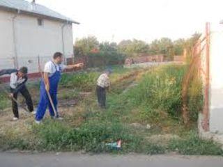 Servicii  curateniie, defrisare si salubrizare terenuri