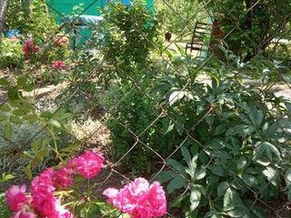 Дача в Цынцаренах с летним домиком 3 500 €