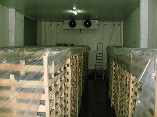 Холодильный комплекс в Кишинёве.80 сот.Отличное расположение.