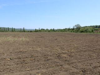 Se vând 4,2 hectare teren arabil.