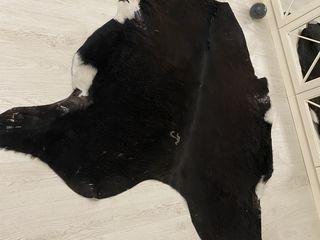 Шкуры коровьи Piele de vaca
