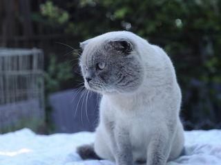 Кот Мачо!