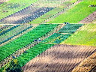 Arendam teren arabil, pina la 350 euro/Ha/an