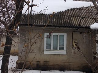 Casa + vie + teren agricol Dumitreni