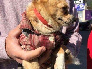 Пропала собака!район Асема!нашедшему вознаграждение!