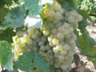 Vin natural, limpede, gustos, filtrat@