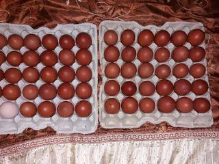 oua/ яйца.