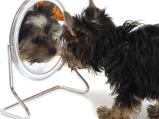 Стрижка собак и кошек (услуги груминга)