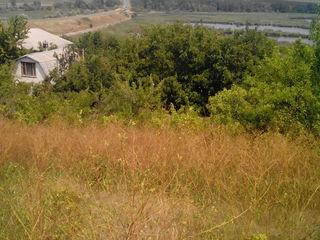 Vand lotului pomicol in Suruceni,cu o vedere frumoasa la lac.Gaz,apa aproape.3700 evro.