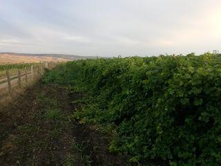 4 terenuri agricole si 4 plantații perene (vita de vie)