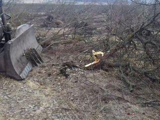 Раскорчёвка старых садов (корчевание деревьев трактором т-74 с лопатой)