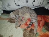 Urgent!!! pisicuță în mâini bune