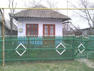 casa in centru in Falesti