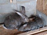 Vind iepuri de toate virstele
