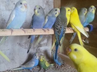 Papagali ,porumbei.