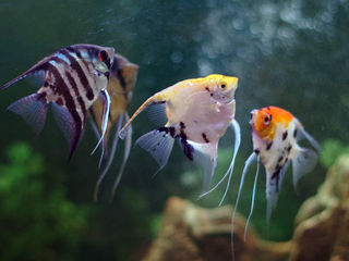 Продам рыбок, растения, креветoк и оборудование для аквариума