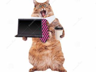 Reparatii laptopuri la deplasare.Garantie 365 zile.Restabilire informatie