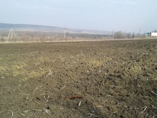 2,5 ha la traseul Chisinau-Ungheni cu constructie 30000 euro, arenda 20 mii lei anual