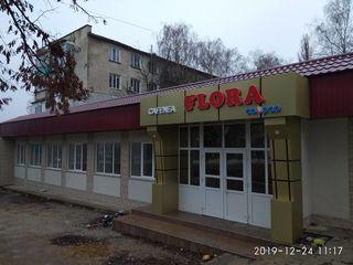 Кафе Флора