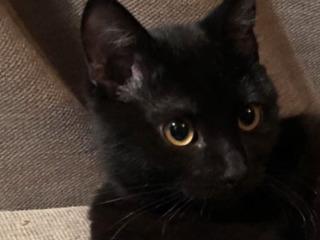 Пропал черный кот на рышкановке