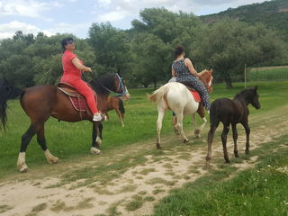 O zi cu caii la Nistru!