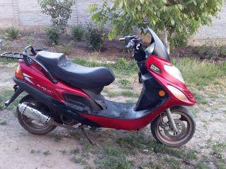 Viper Honda