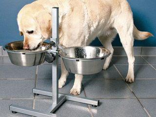 """Мастеркая зоосалона """"Mister Dog"""" предлагае!Миски на регулируемой стойке 250 лей.Оптовые цены - 20 %."""