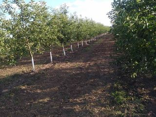 Livadă de mere (7.2 ha)
