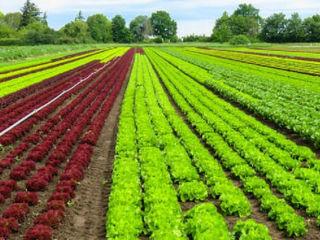 Credite pentru agricultori.