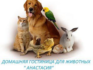 """Домашняя гостиница для животных """"Анастасия"""" передержка как дома!"""